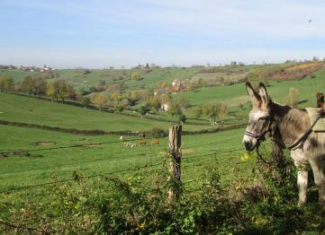 Discovering Burgundy with a donkey